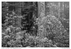 Coastal Forest Black And White